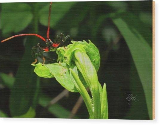 Assassin Bug Wood Print