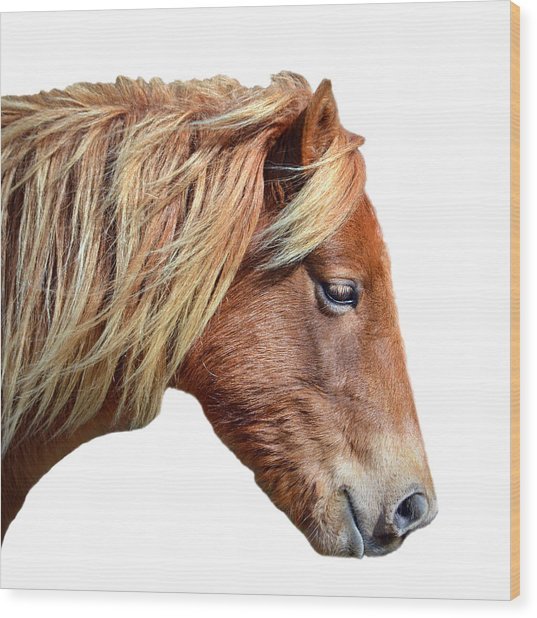 Wood Print featuring the photograph Assateague Pony Sarah's Sweet On White by Bill Swartwout Fine Art Photography