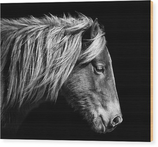Wood Print featuring the photograph Assateague Pony Sarah's Sweet Tea B And W by Bill Swartwout Fine Art Photography