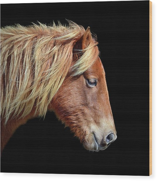 Wood Print featuring the photograph Assateague Pony Sarah's Sweet Tea On Black Square by Bill Swartwout Fine Art Photography