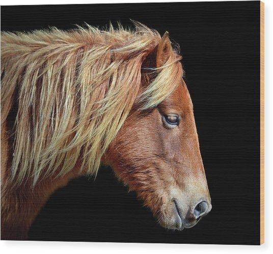 Assateague Pony Sarah's Sweet Tea Portrait On Black Wood Print