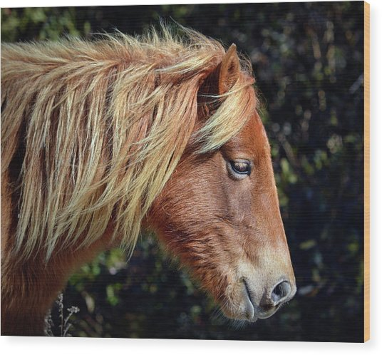 Wood Print featuring the photograph Assateague Pony Sarah's Sweet Tea Profile by Bill Swartwout Fine Art Photography