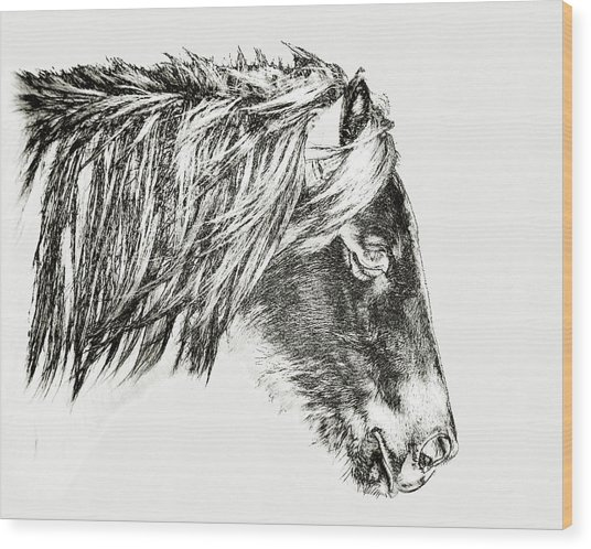 Wood Print featuring the photograph Assateague Pony Sarah's Sweet Tea Sketch by Bill Swartwout Fine Art Photography