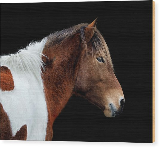 Wood Print featuring the photograph Assateague Pony Susi Sole Portrait On Black by Bill Swartwout Fine Art Photography