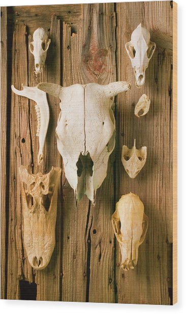 Assorted Animal Skulls On Wooden Fence Wood Print by Garry Gay
