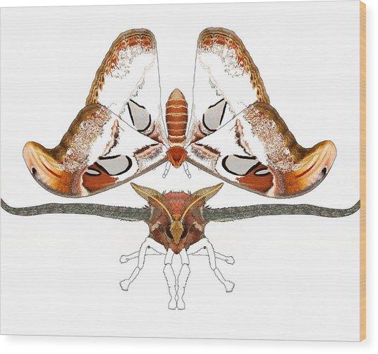 Atlas Moth2 Wood Print