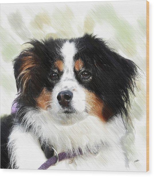 Australian Shepherd - Dwp3237735 Wood Print