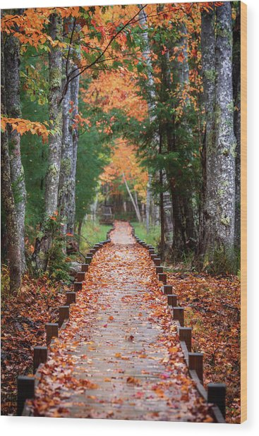 Autumn At Jesup Path Wood Print