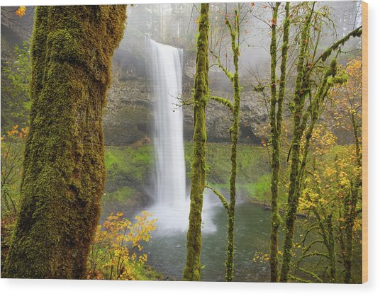 Autumn At Silver Falls State Park Wood Print