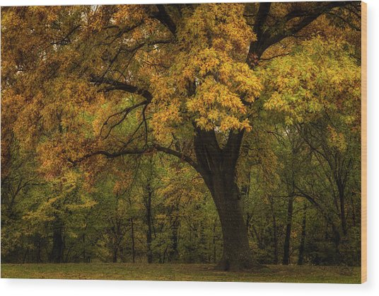 Wood Print featuring the photograph Autumn Beauty by Scott Bean