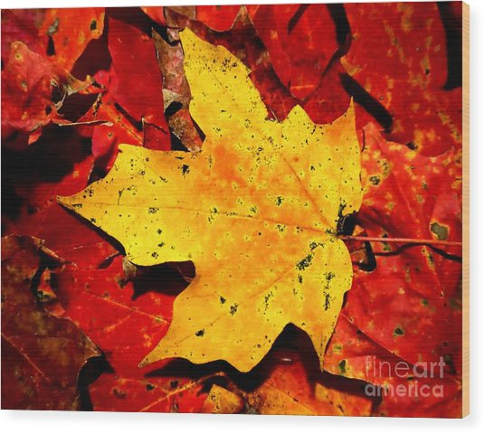 Autumn Beige Yellow Leaf On Red Leaves Wood Print