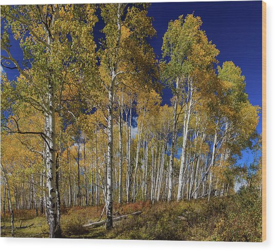 Wood Print featuring the photograph Autumn Blue Skies by James BO Insogna