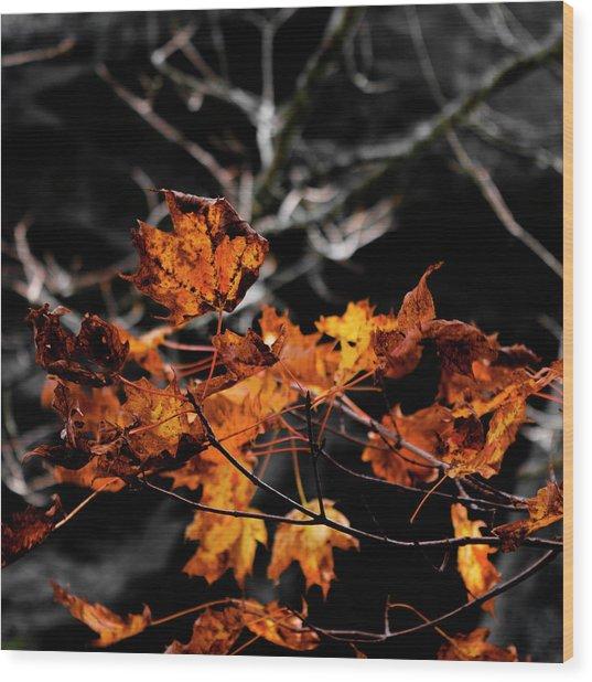 Autumn Brown Wood Print by Christine Buckley