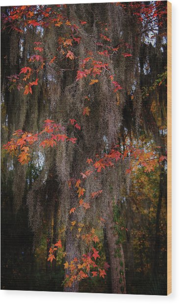 Autumn Color In Spanish Moss Wood Print