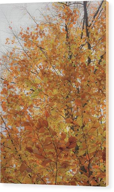 Autumn Explosion 1 Wood Print