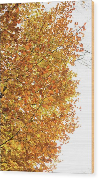 Autumn Explosion 2 Wood Print