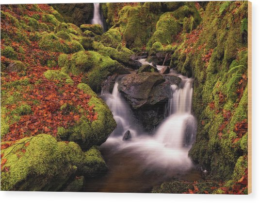 Wood Print featuring the photograph Autumn Falls by Elliott Coleman