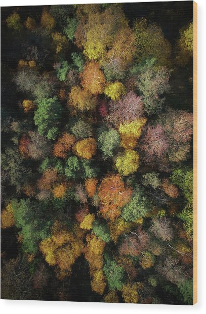 Autumn Forest - Aerial Photography Wood Print