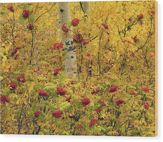 Autumn Forest Colors Wood Print