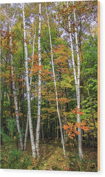 Autumn Grove, Vertical Wood Print