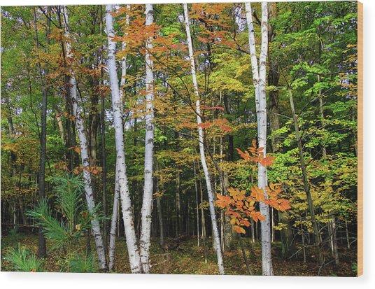Autumn Grove, Wisconsin Wood Print