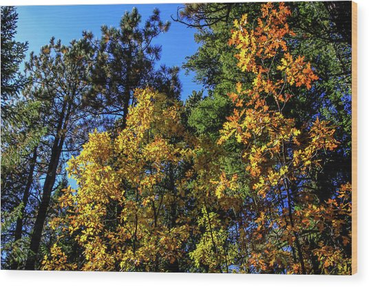 Autumn In Apache Sitgreaves National Forest, Arizona Wood Print