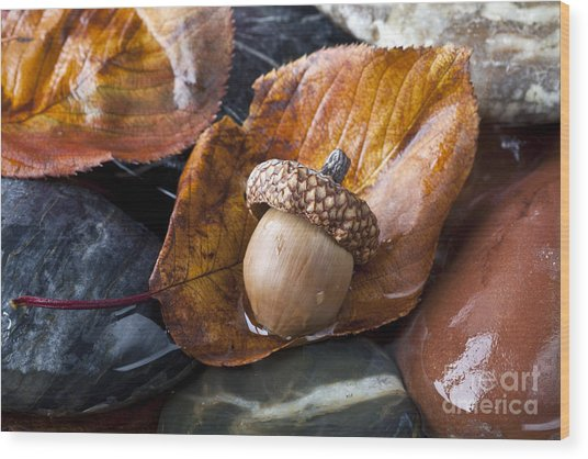 Autumn In Central Park With Acorn On Wood Print