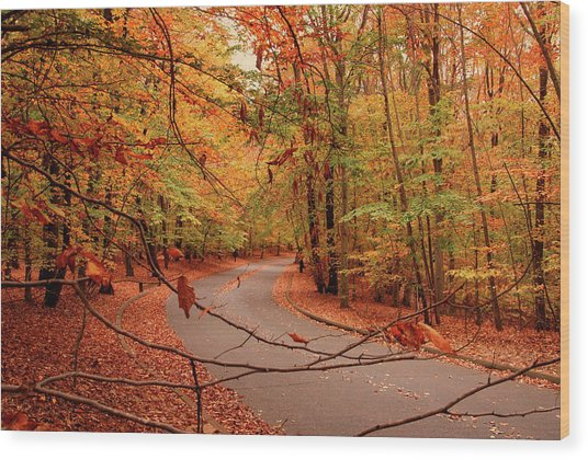 Autumn In Holmdel Park Wood Print