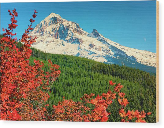 Autumn In Lolo Pass Mt. Hood National Forest Wood Print
