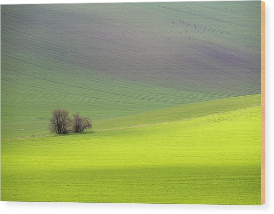 Autumn In South Moravia 13 Wood Print