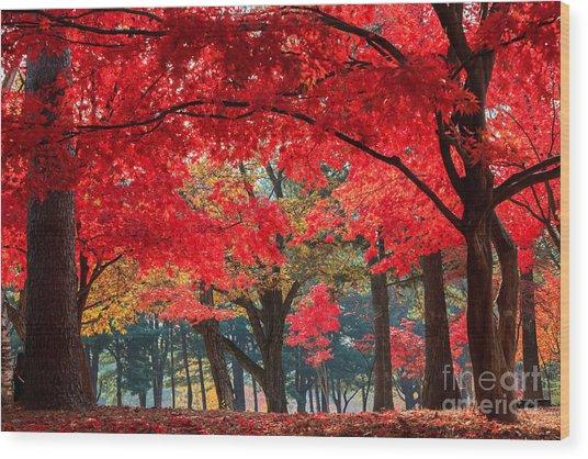 Autumn In Nami Island Wood Print