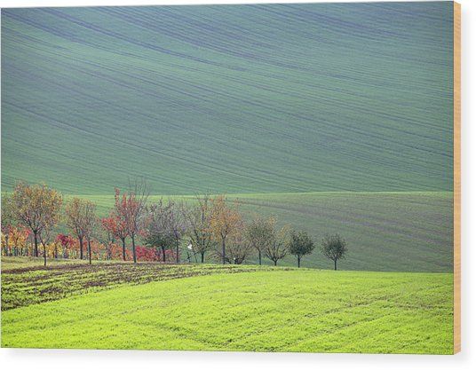 Autumn In South Moravia 18 Wood Print