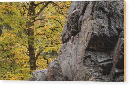 Rock 'n' Tree Wood Print by Dalibor Hanzal