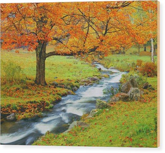 Autumn In Vermont G Wood Print by Ron thomas