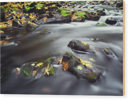 Wood Print featuring the photograph Autumn Landscape by Nicole Young