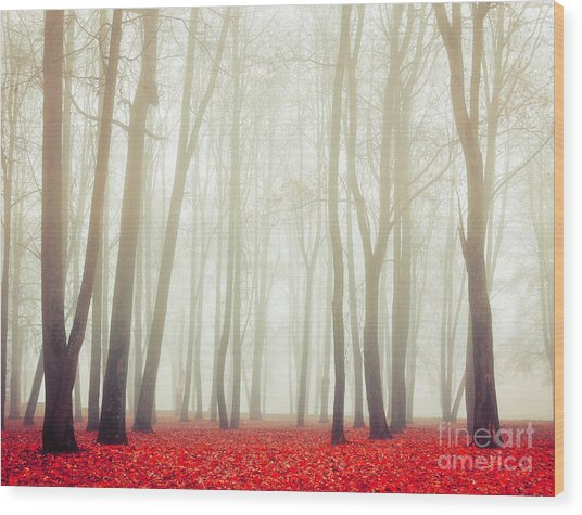 Autumn Landscape With Tall Bare Trees Wood Print