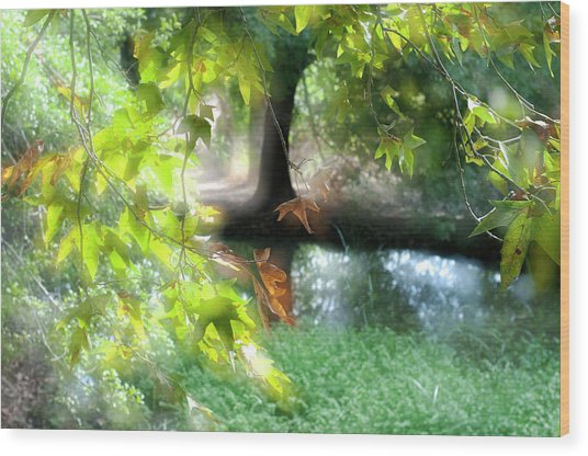 Autumn Leaves In The Morning Light Wood Print
