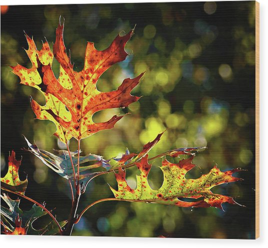 Autumn Mosaic Wood Print