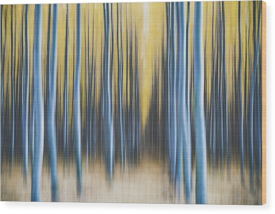 Wood Print featuring the photograph Autumn Poplars by Nicole Young