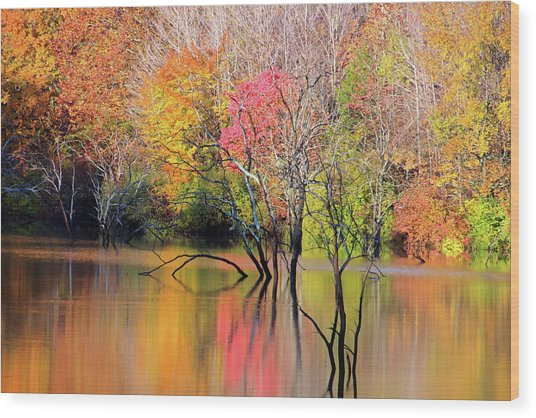 Wood Print featuring the photograph Autumn Reflections At Alum Creek by Angela Murdock
