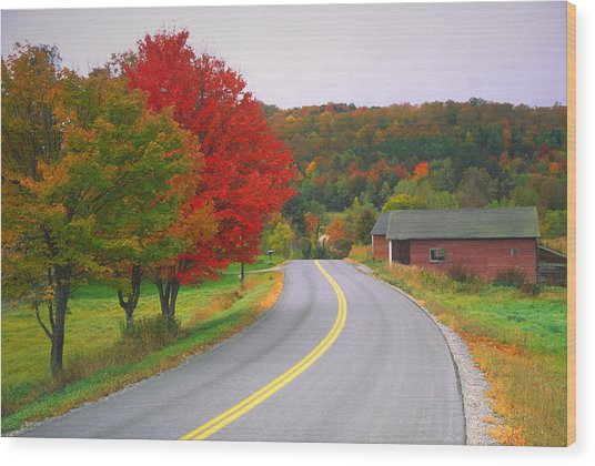 Autumn Road Wood Print by Denistangneyjr