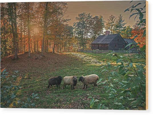Autumn Sunset At The Old Farm Wood Print