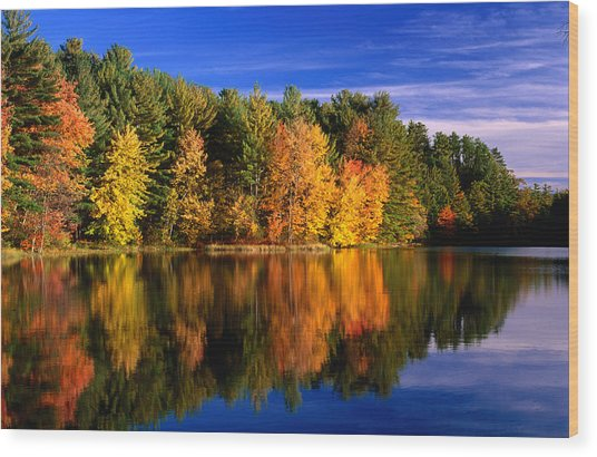 Autumn Trees In New Hampshire,new Wood Print