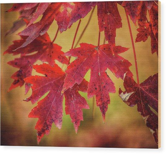 Autumn Watch Wood Print