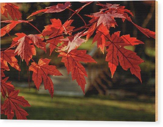Autumn Whispers  Wood Print