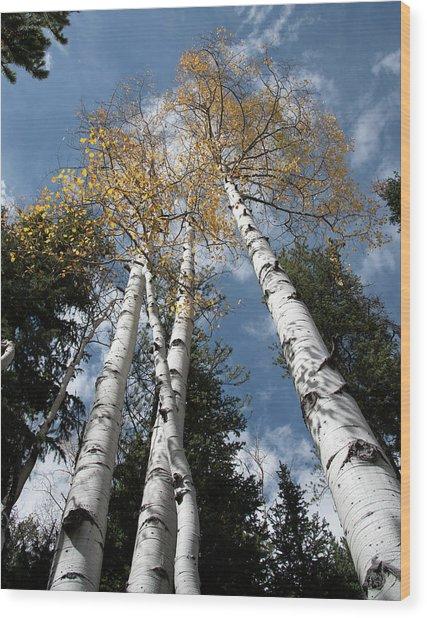 Autumnal Aspen Wood Print