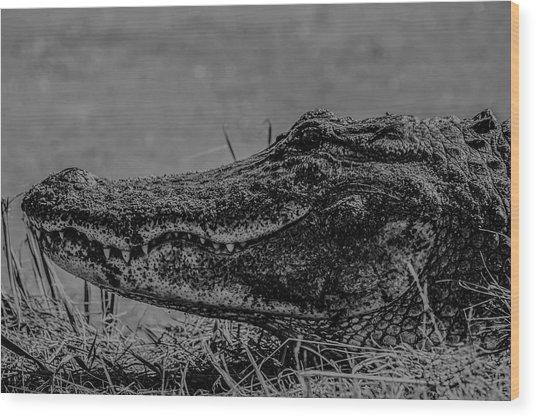 B And W Gator Wood Print