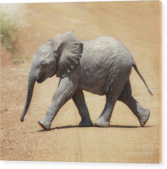 Baby African Elephant Wood Print