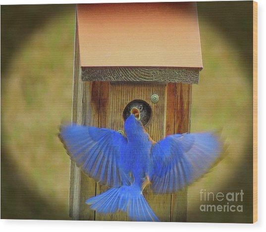 Baby Bluebird Feeding Time Wood Print