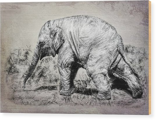 Baby Elephant Walk Wood Print